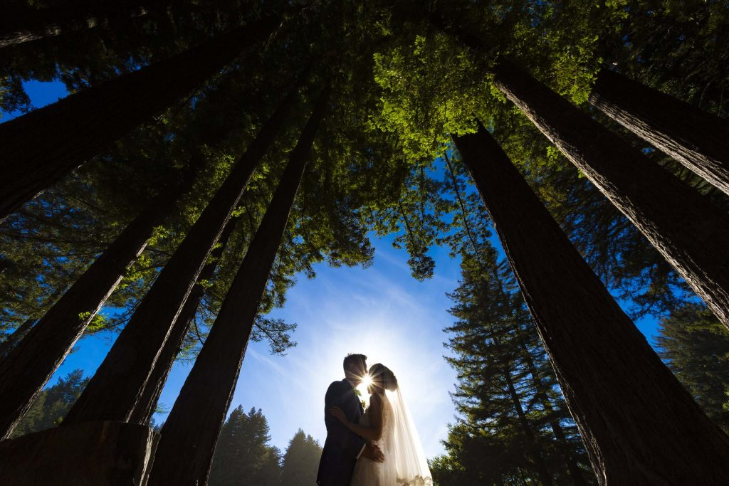 couple backlit under trees