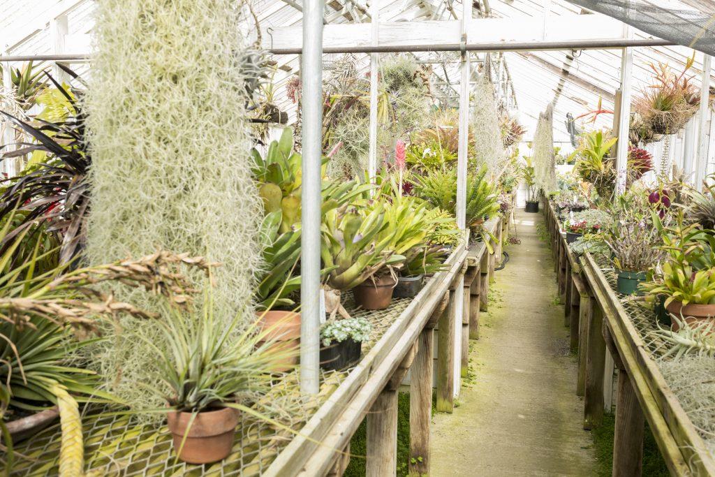 shelldance orchid gardens_2