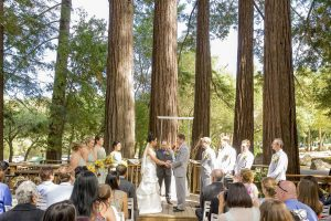 sanborn county park wedding bride and groom standing under redwood trees while wedding guests watch