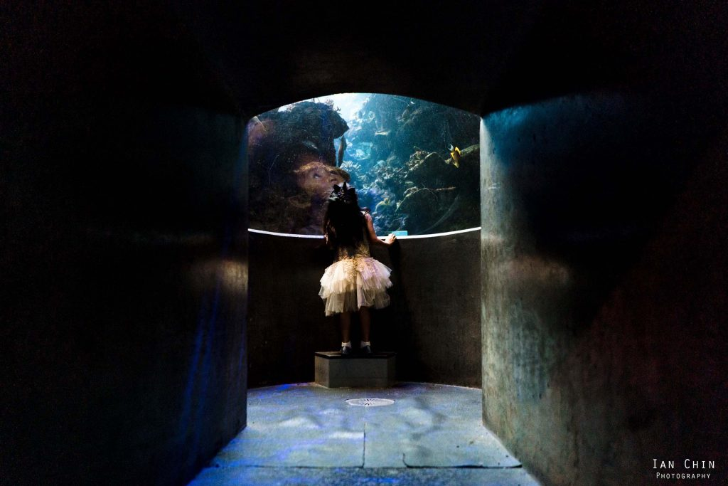 california academy of sciences wedding girl looking up into an aquarium
