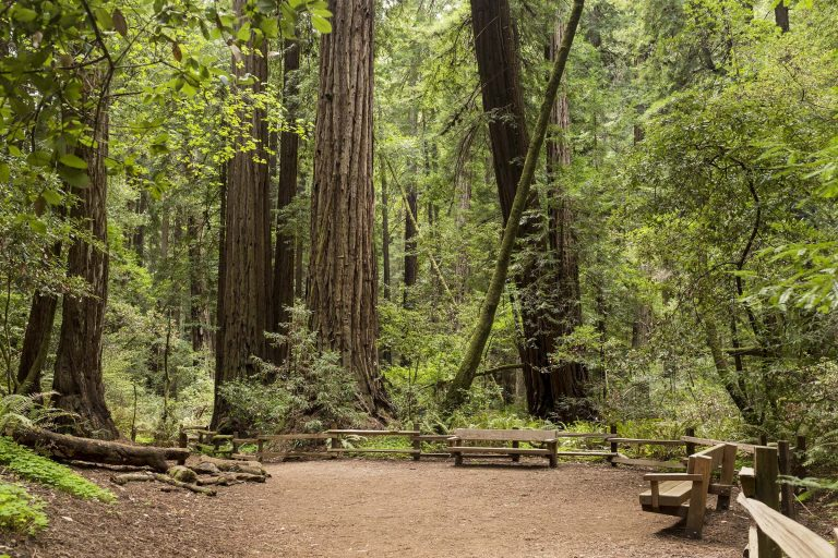 Muir Woods Wedding site with benches and redwood trees all around