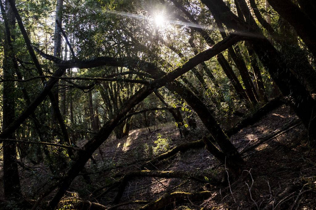 mount tamalpais wedding forest area with sunburst